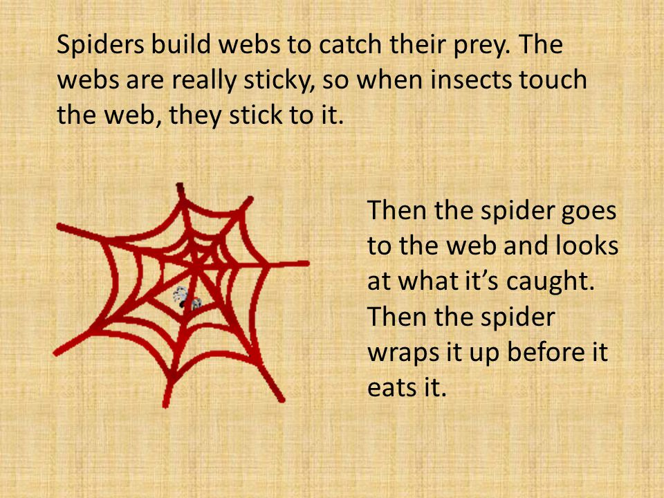 Spiders build webs to catch their prey