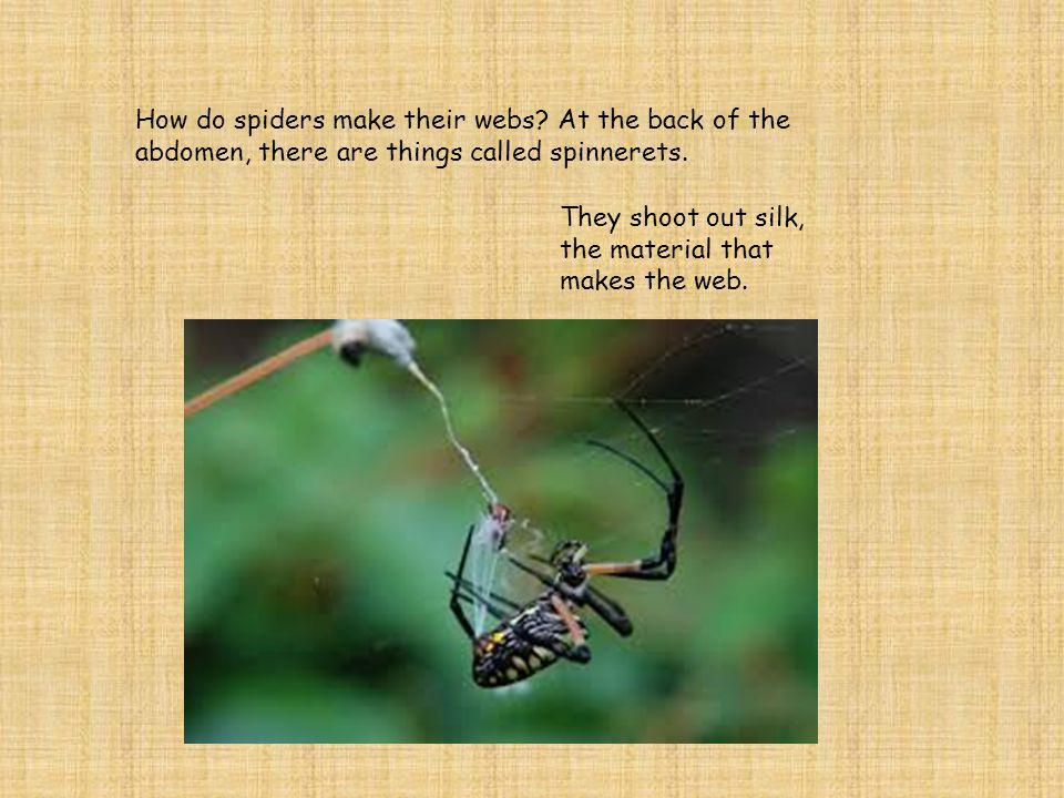 How do spiders make their webs