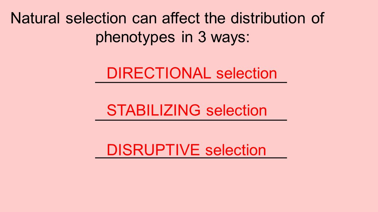 Natural selection can affect the distribution of phenotypes in 3 ways: