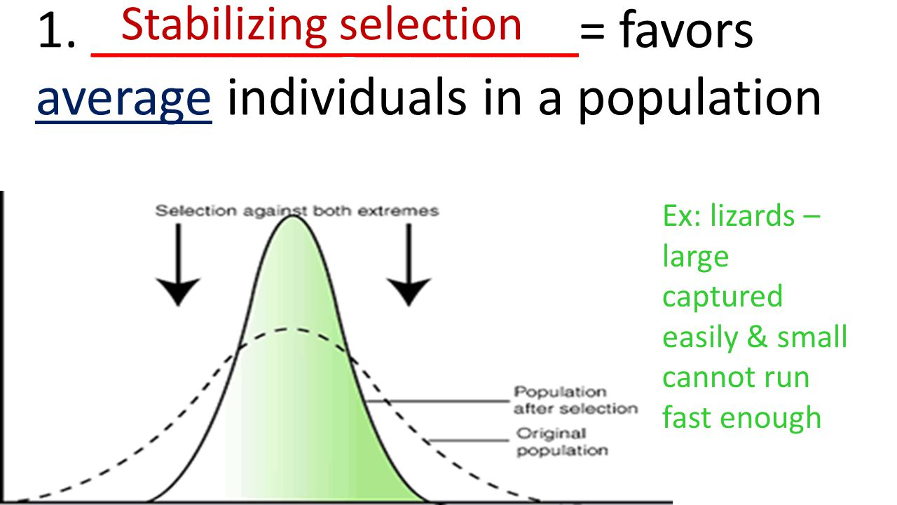 1. _________ ________= favors average individuals in a population