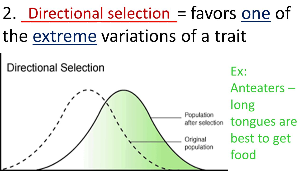 2. ________ ________= favors one of the extreme variations of a trait
