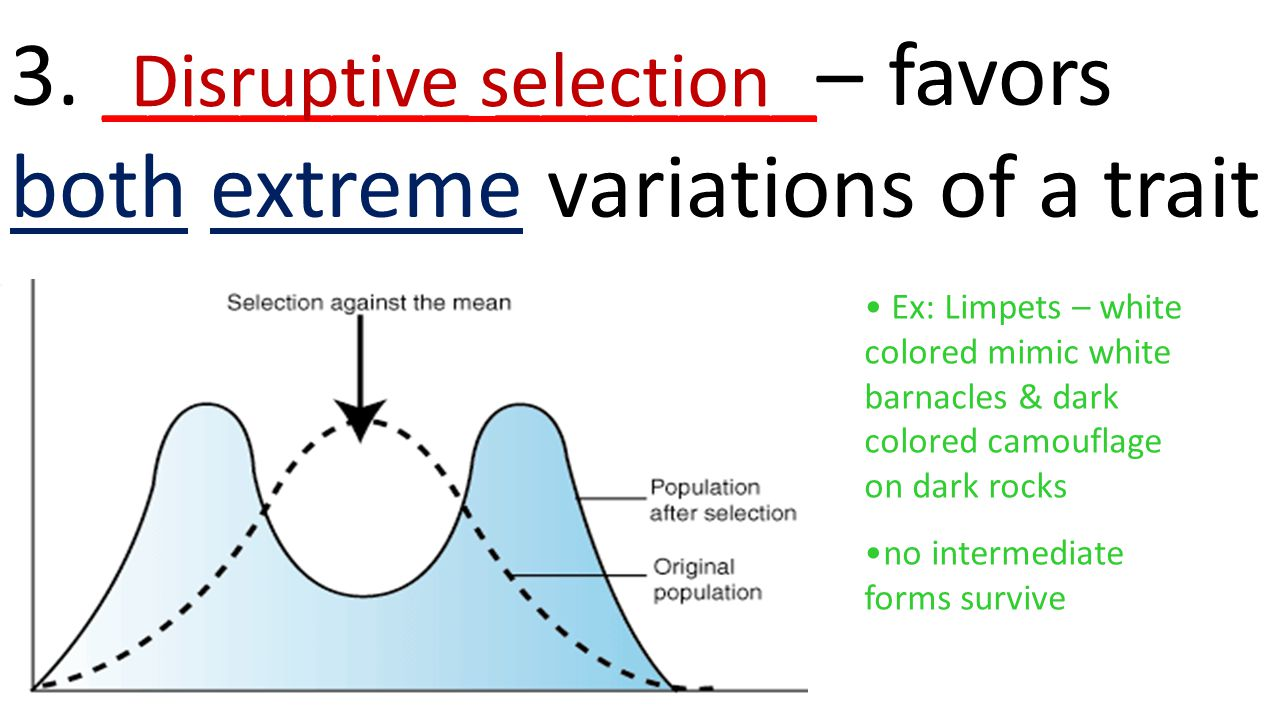 3. ________ _______– favors both extreme variations of a trait