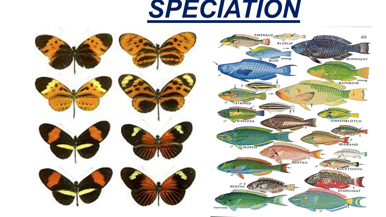 SPECIATION Chapter 16-3 27