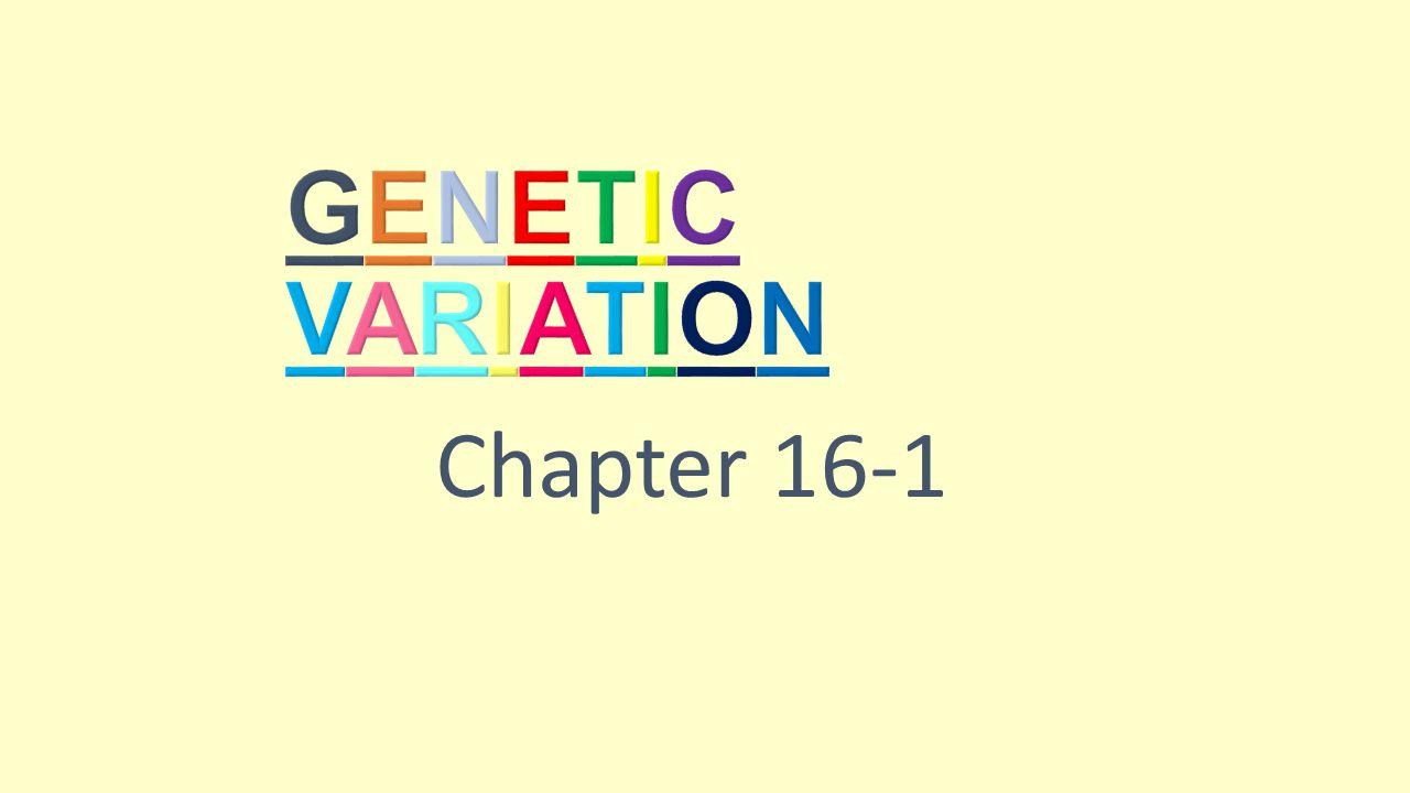 Genetic Variation Chapter 16-1 3
