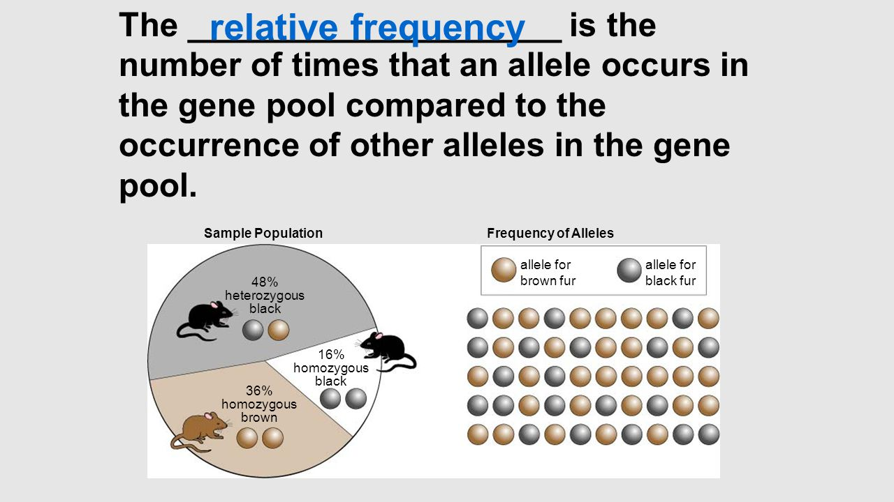 The ____________________ is the number of times that an allele occurs in the gene pool compared to the occurrence of other alleles in the gene pool.