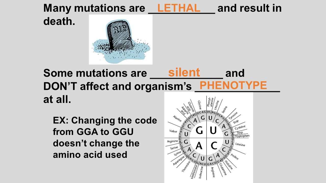 silent Many mutations are ___________ and result in death.