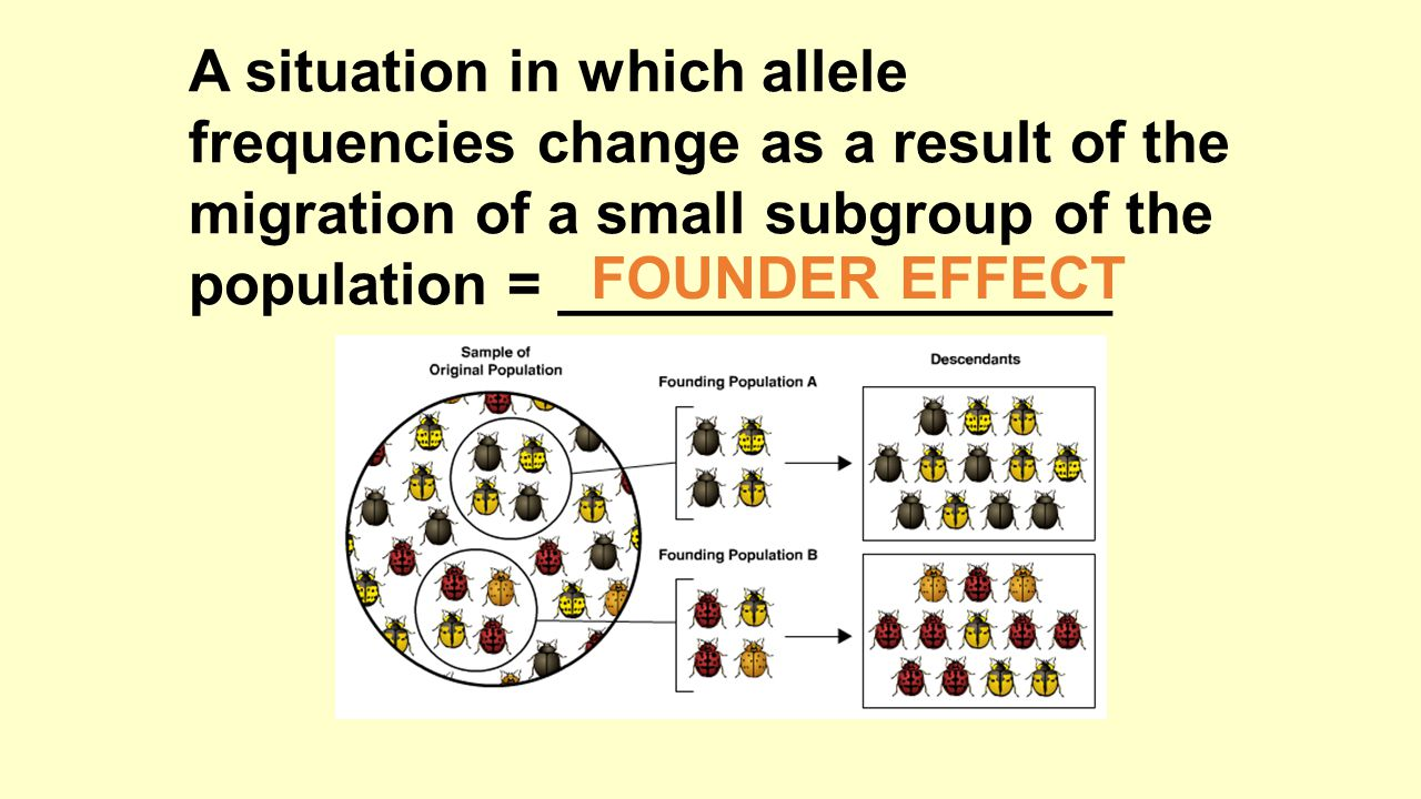 A situation in which allele frequencies change as a result of the