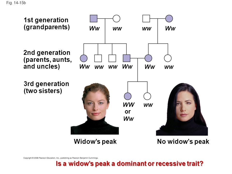 Is a widow's peak a dominant or recessive trait