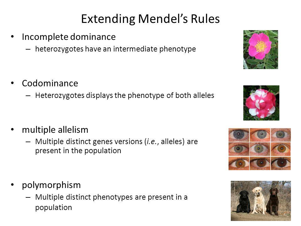 Extending Mendel's Rules