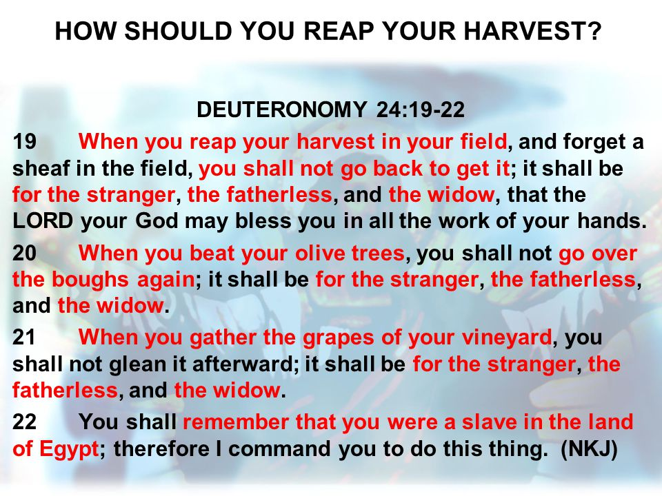HOW SHOULD YOU REAP YOUR HARVEST