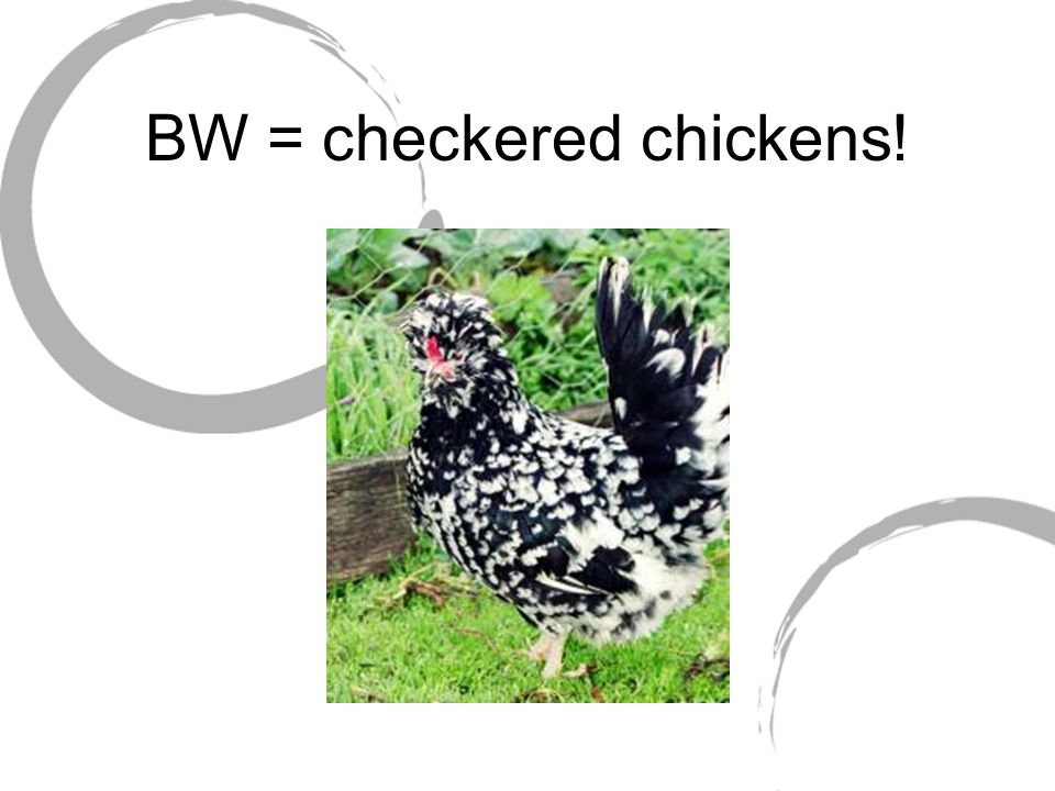 BW = checkered chickens!