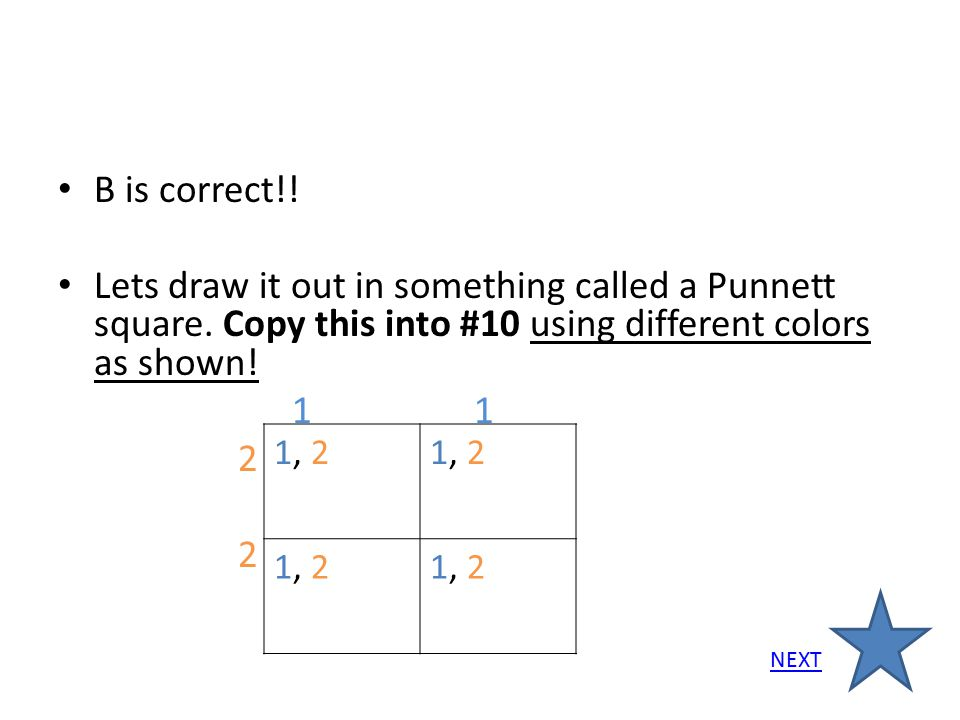 B is correct!! Lets draw it out in something called a Punnett square. Copy this into #10 using different colors as shown!