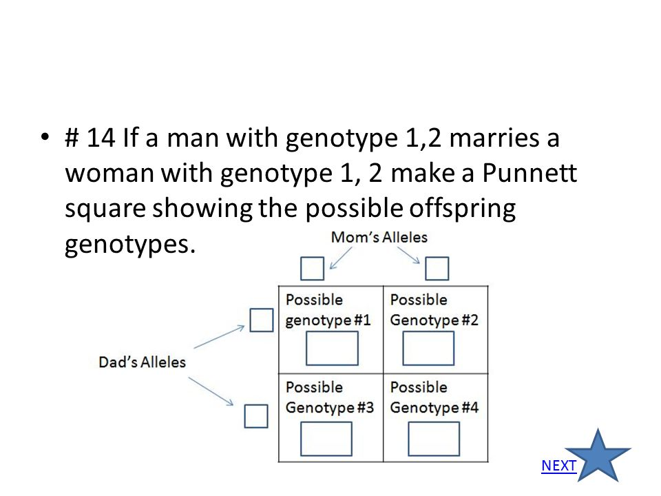 # 14 If a man with genotype 1,2 marries a woman with genotype 1, 2 make a Punnett square showing the possible offspring genotypes.