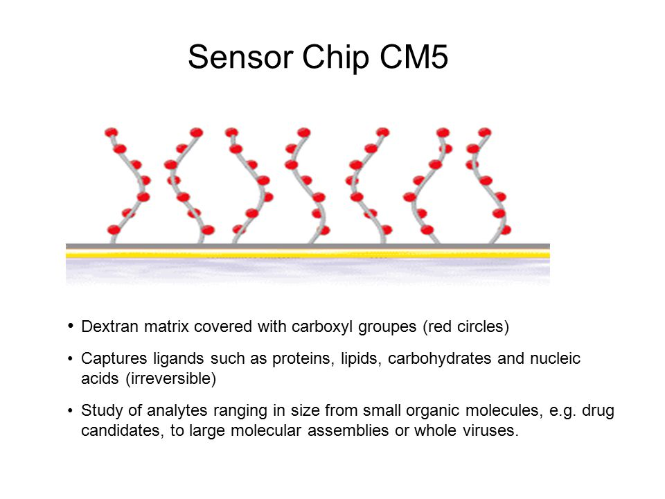 Sensor Chip CM5 Dextran matrix covered with carboxyl groupes (red circles)