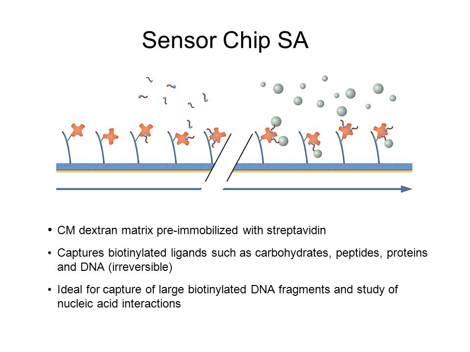 Sensor Chip SA CM dextran matrix pre-immobilized with streptavidin
