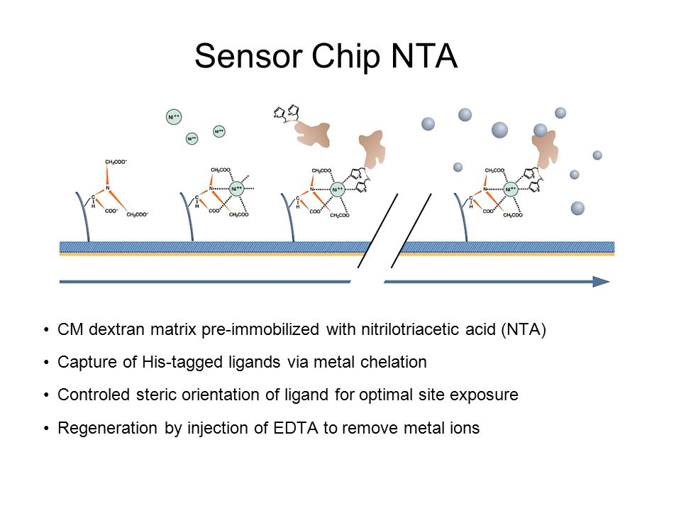 Sensor Chip NTA CM dextran matrix pre-immobilized with nitrilotriacetic acid (NTA) Capture of His-tagged ligands via metal chelation.