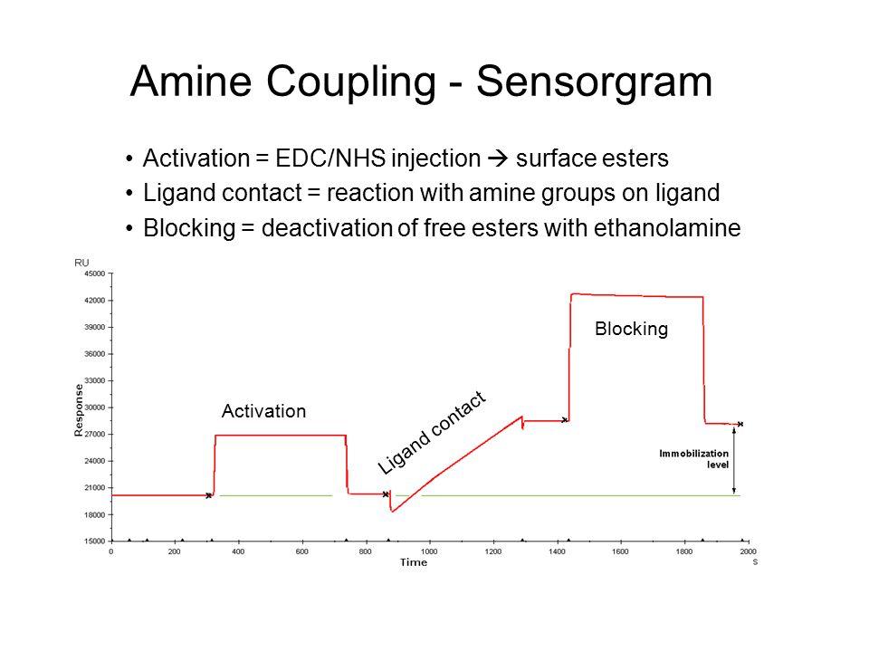 Amine Coupling - Sensorgram