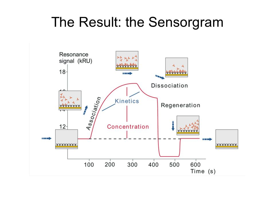 The Result: the Sensorgram