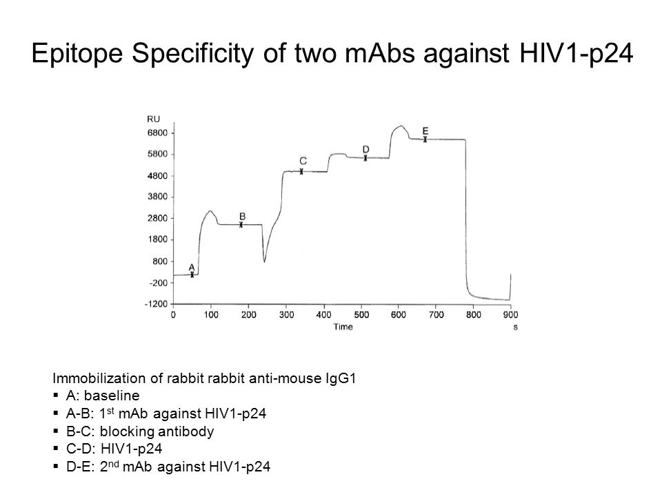 Epitope Specificity of two mAbs against HIV1-p24