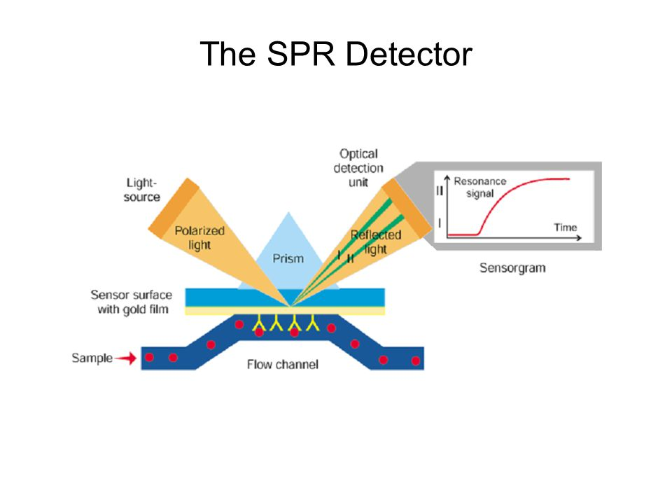 The SPR Detector