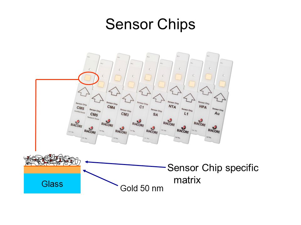 Sensor Chips Sensor Chip specific matrix Glass Gold 50 nm