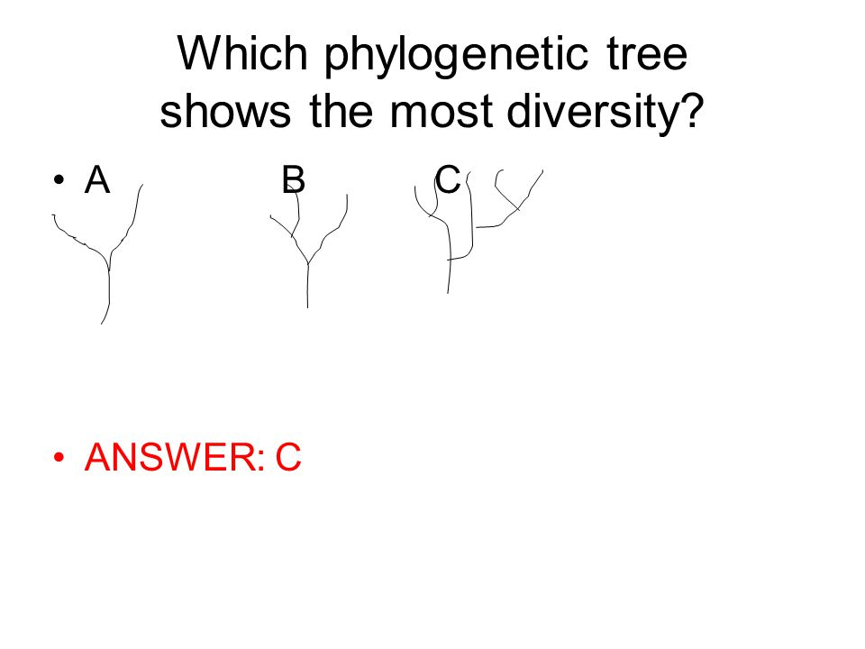 Which phylogenetic tree shows the most diversity