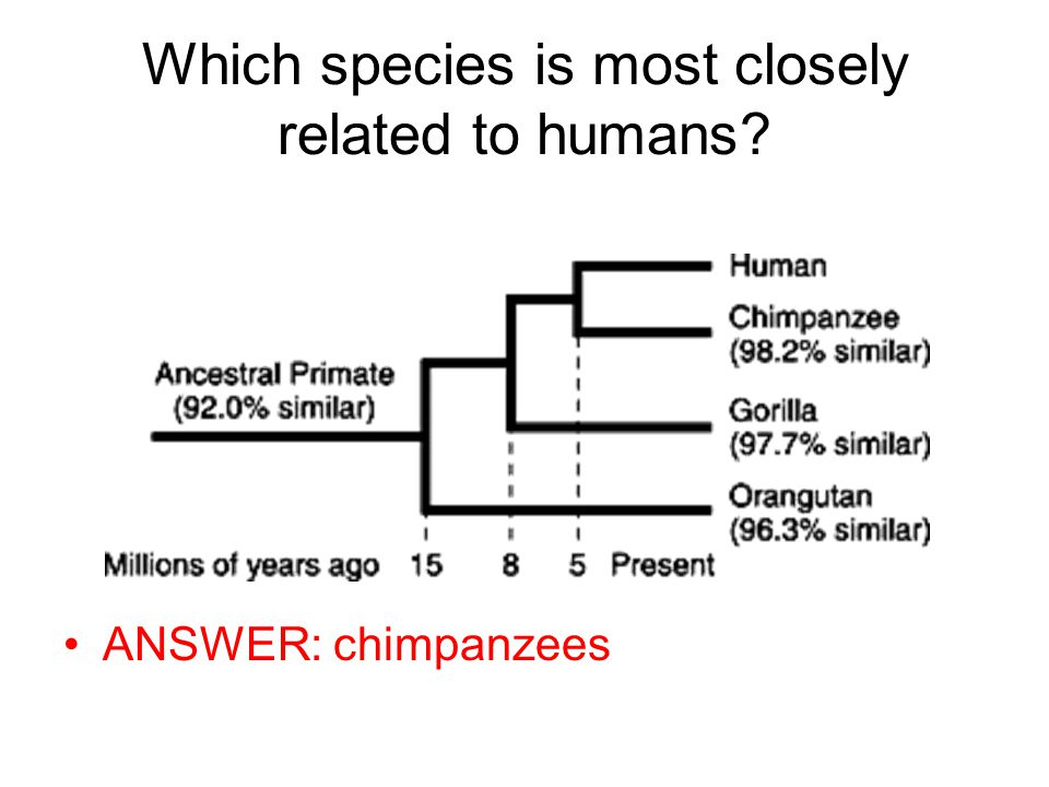 Which species is most closely related to humans