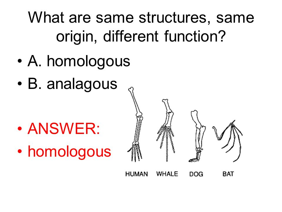 What are same structures, same origin, different function