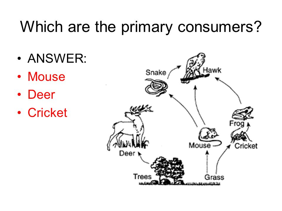 Which are the primary consumers
