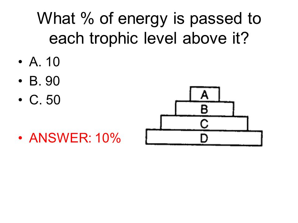 What % of energy is passed to each trophic level above it