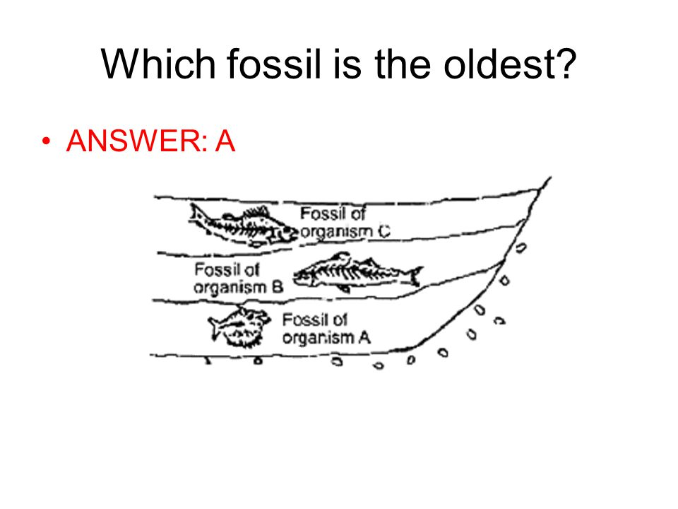 Which fossil is the oldest