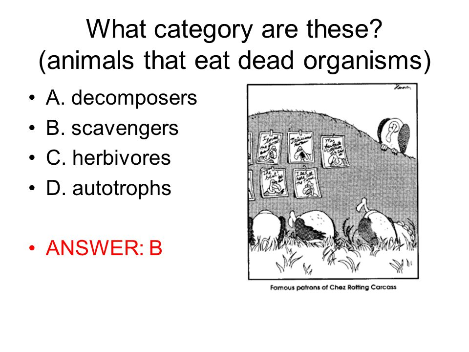 What category are these (animals that eat dead organisms)