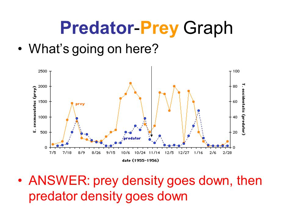 Predator-Prey Graph What's going on here