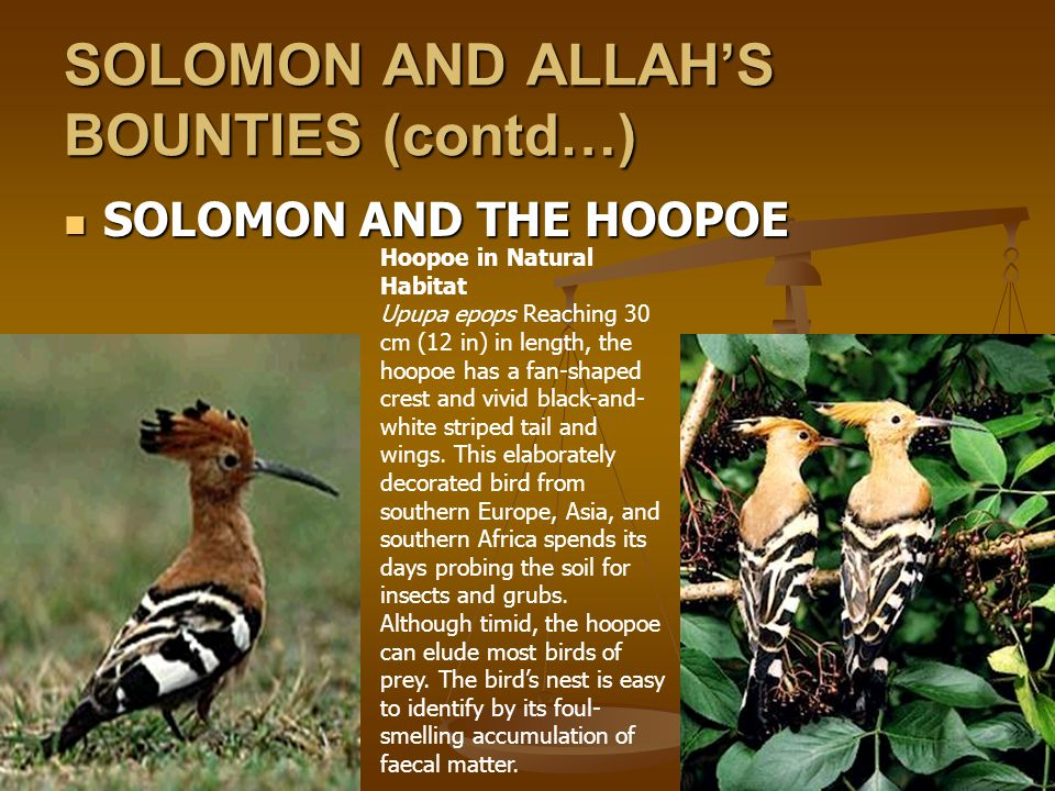 SOLOMON AND ALLAH'S BOUNTIES (contd…)