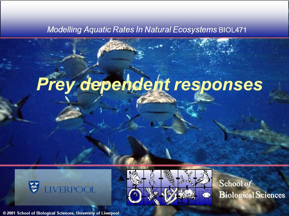 Modelling Aquatic Rates In Natural Ecosystems BIOL471