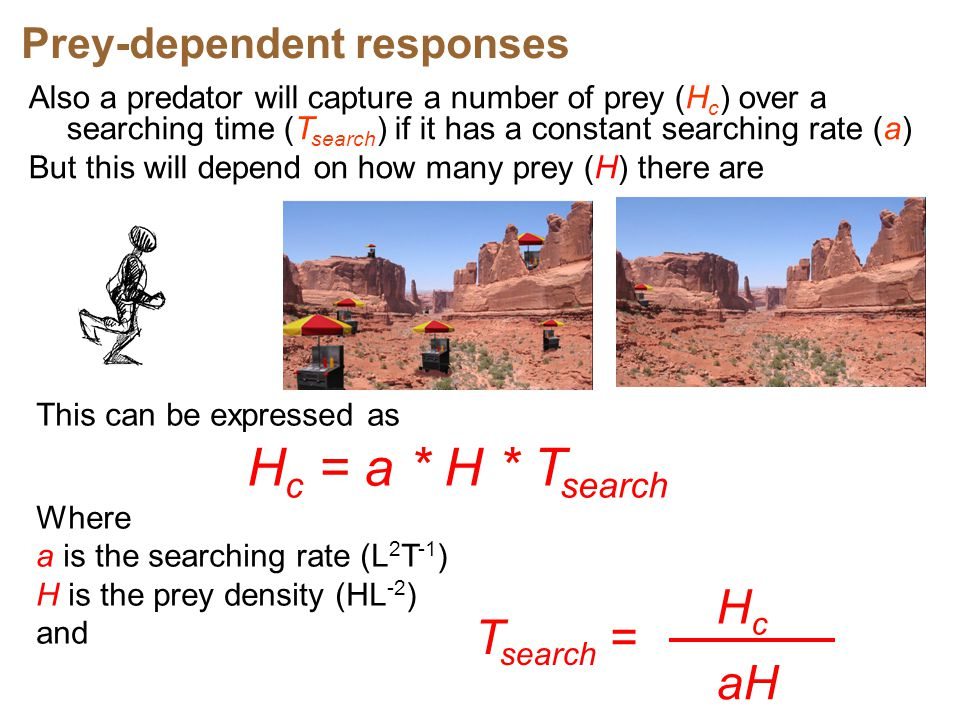 Hc = a * H * Tsearch Hc Tsearch = aH Prey-dependent responses