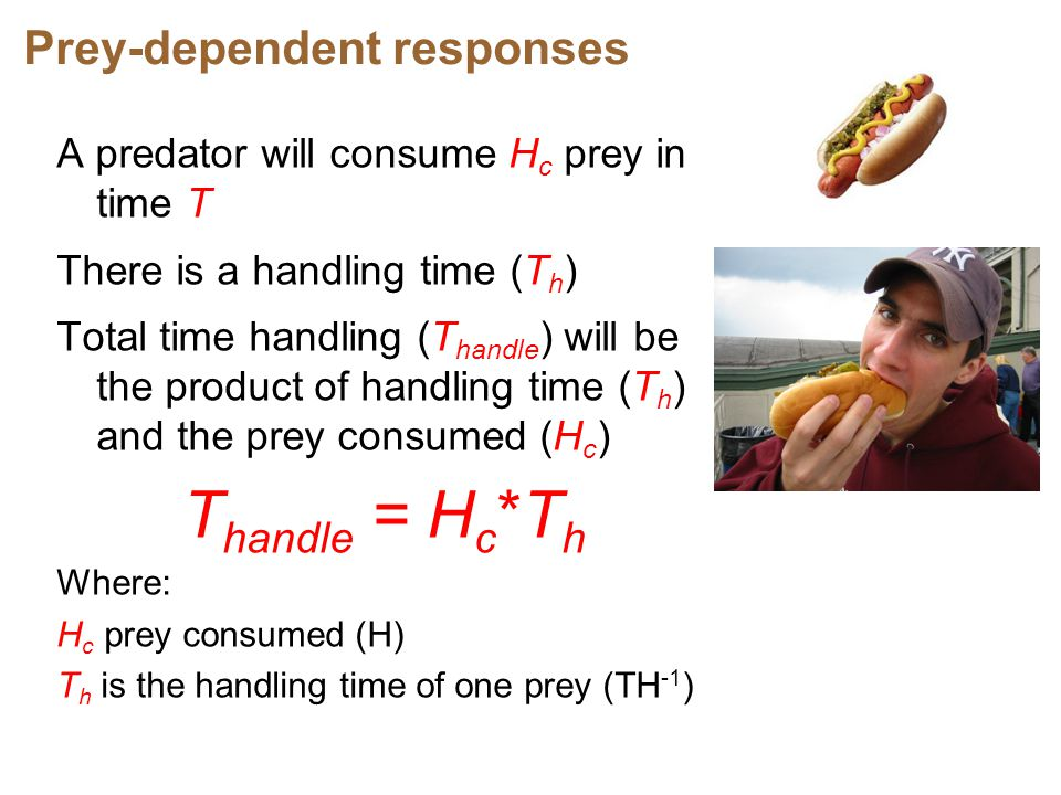 Thandle = Hc*Th Prey-dependent responses