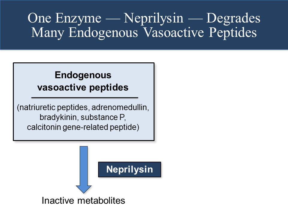 One Enzyme — Neprilysin — Degrades Many Endogenous Vasoactive Peptides