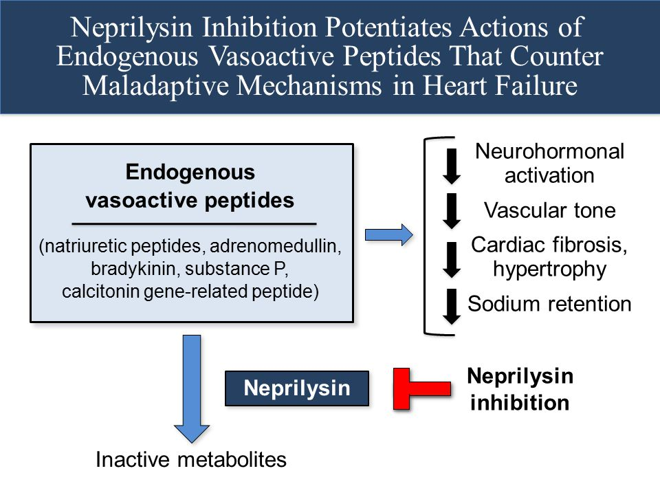 Neprilysin Inhibition Potentiates Actions of