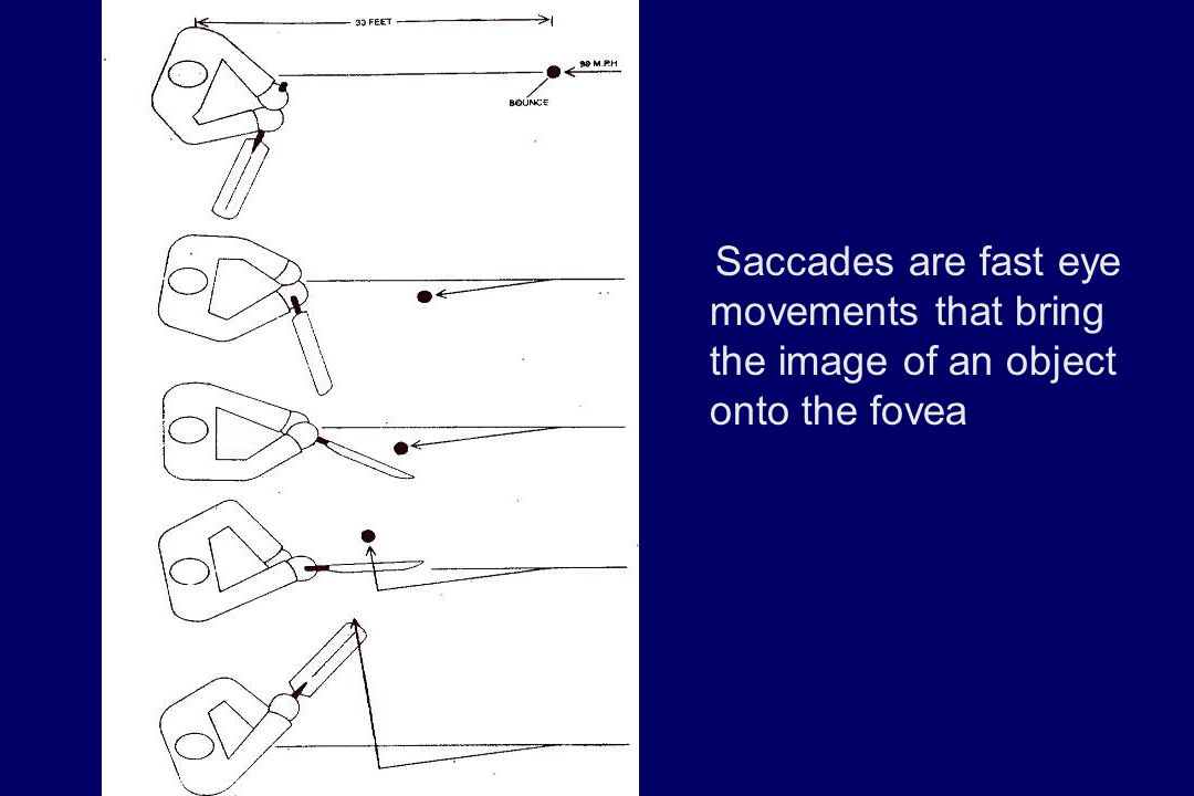 Saccades are fast eye movements that bring the image of an object onto the fovea