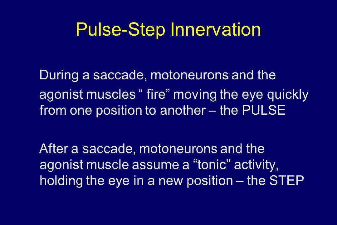 Pulse-Step Innervation