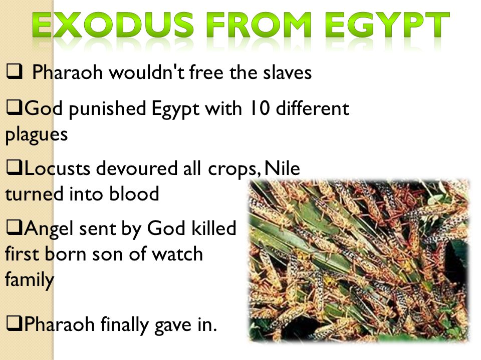 Exodus from Egypt Pharaoh wouldn t free the slaves