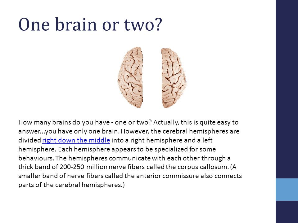 One brain or two