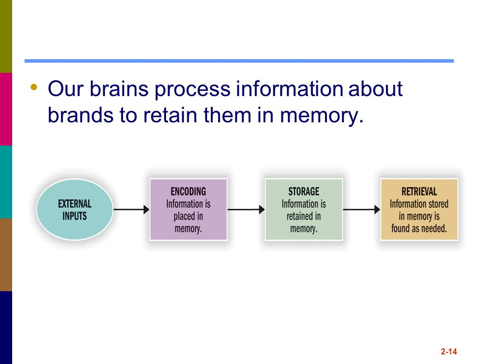 Our brains process information about brands to retain them in memory.
