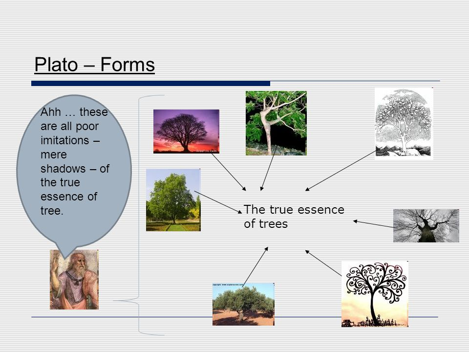 Plato – Forms Ahh … these are all poor imitations – mere shadows – of the true essence of tree.