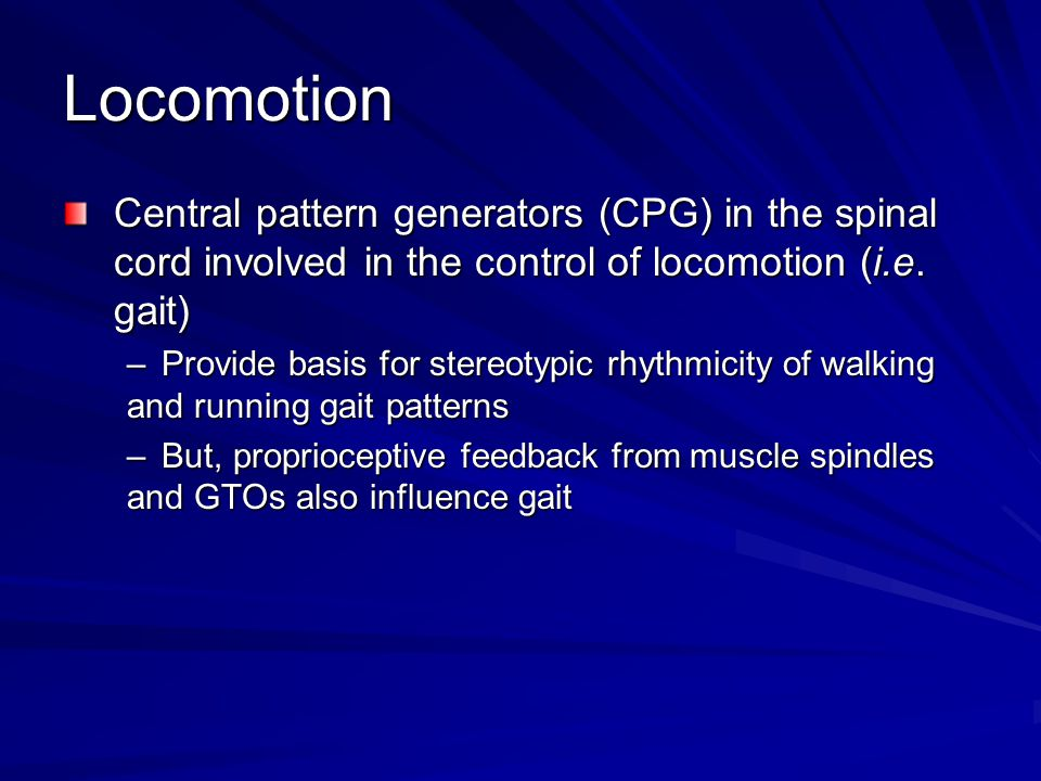 Locomotion Central pattern generators (CPG) in the spinal cord involved in the control of locomotion (i.e. gait)