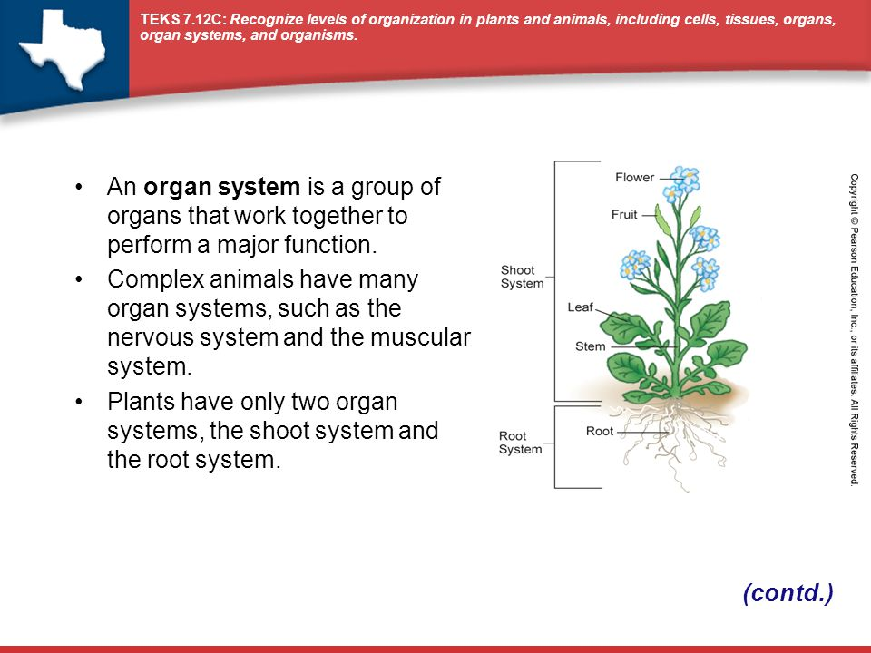 An organ system is a group of organs that work together to perform a major function.