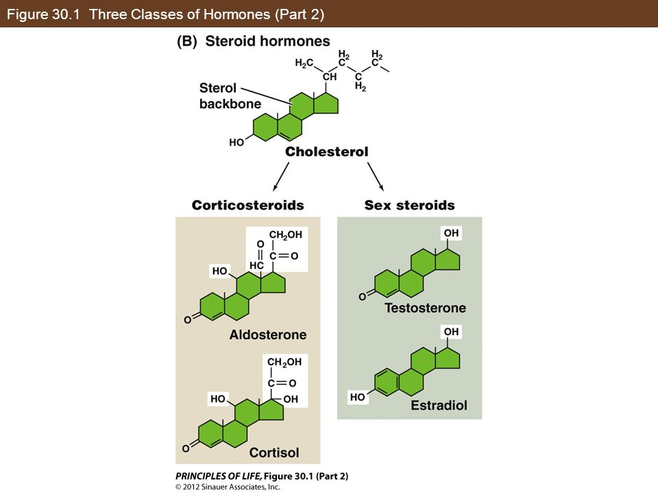 Figure 30.1 Three Classes of Hormones (Part 2)