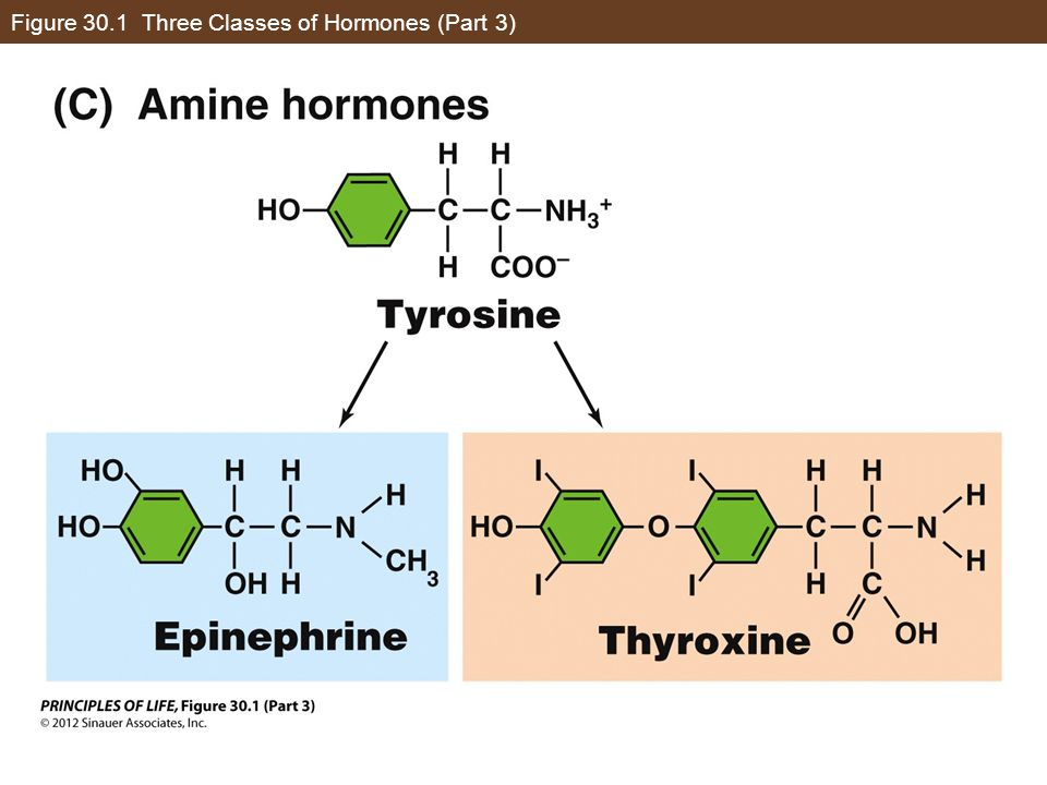 Figure 30.1 Three Classes of Hormones (Part 3)