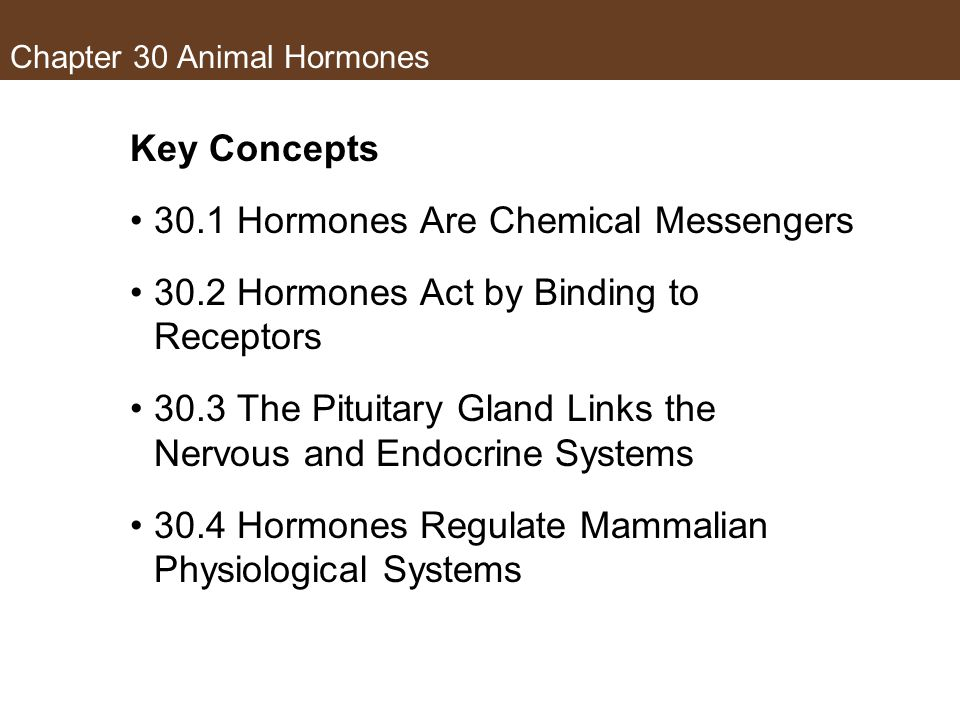 Chapter 30 Animal Hormones